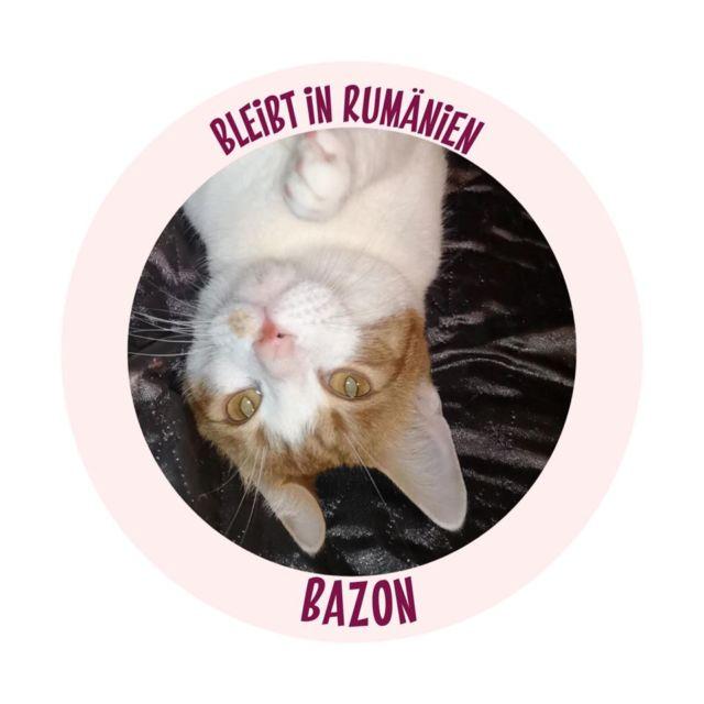 Bazon