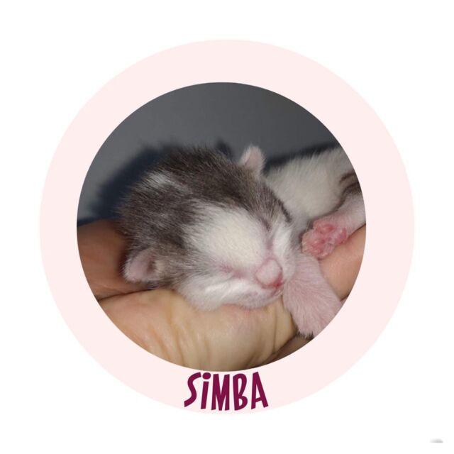TBSimba