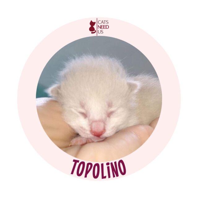 TBTopolino
