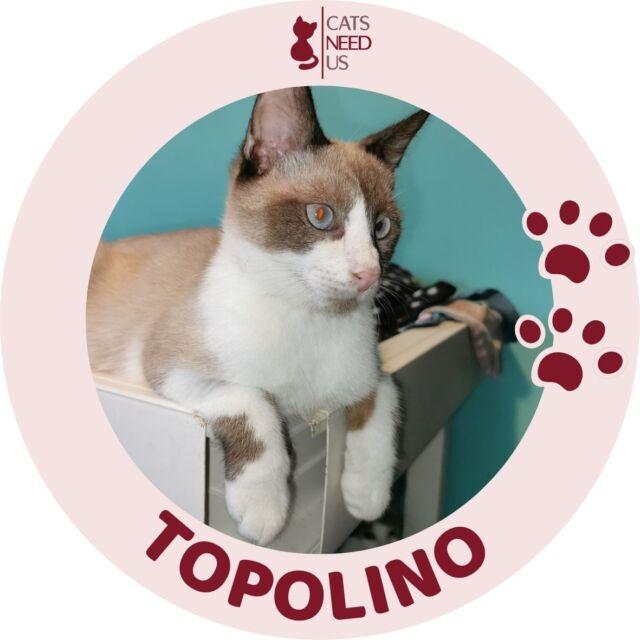 Topolino RO