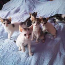 Kitten Rumänien