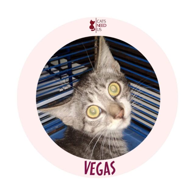 TB Vegas