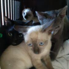 Ausgesetze Kitten