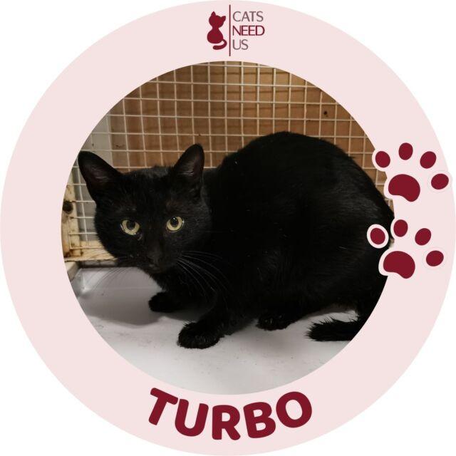 Turbo NEW