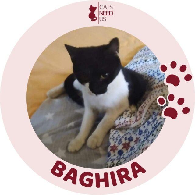 Baghira