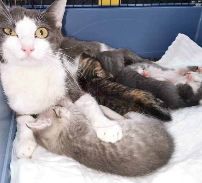 Mayka & Kitten 2