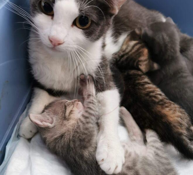 Mayka & Kitten